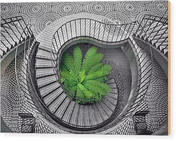 Tree Fern In The Stairs Wood Print by Daniel Furon