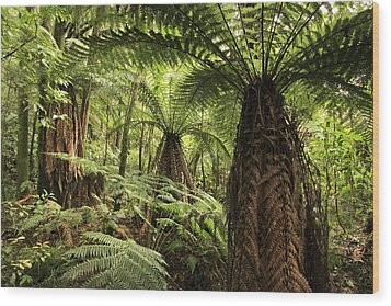 Tree Ferns Wood Print by Les Cunliffe