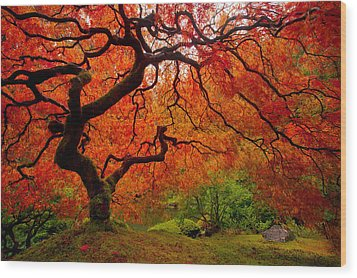 Tree Fire Wood Print by Darren  White