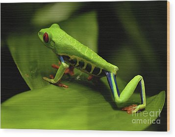 Tree Frog 12 Wood Print by Bob Christopher