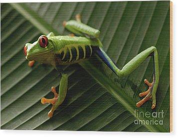 Tree Frog 16 Wood Print by Bob Christopher