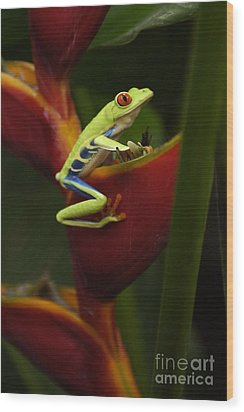 Tree Frog 3 Wood Print by Bob Christopher