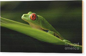 Tree Frog 7 Wood Print by Bob Christopher