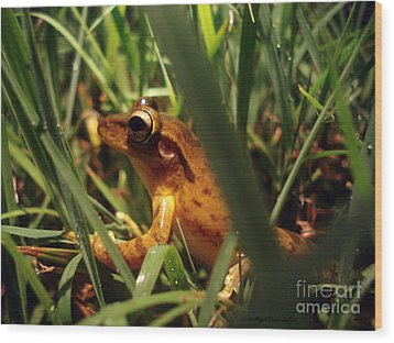 Wood Print featuring the photograph Tree Frog Chorus by Megan Dirsa-DuBois