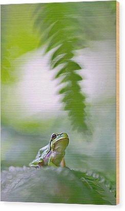 tree frog Hyla arborea Wood Print by Dirk Ercken