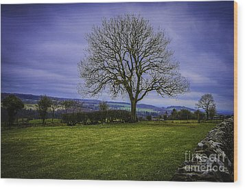 Tree - Hadrian's Wall Wood Print