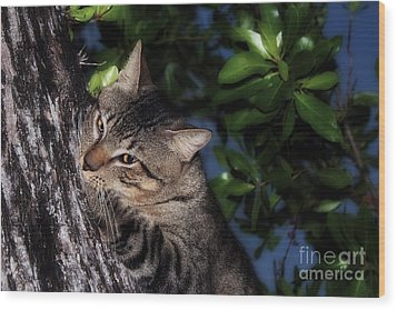 Wood Print featuring the photograph Tree Hugging Cat by Marjorie Imbeau