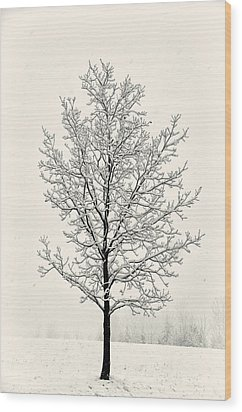 Tree In Heavy Snow Wood Print by Joseph Duba