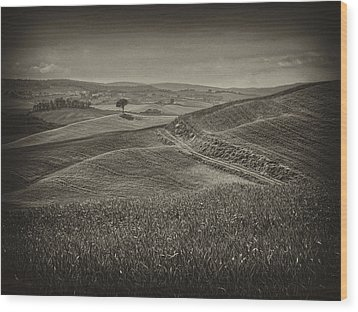 Wood Print featuring the photograph Tree In Sienna by Hugh Smith