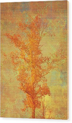 Tree In Sunlight Wood Print