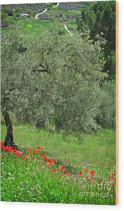 Tree In The Meadow Near Ronda  Wood Print by Mary Machare