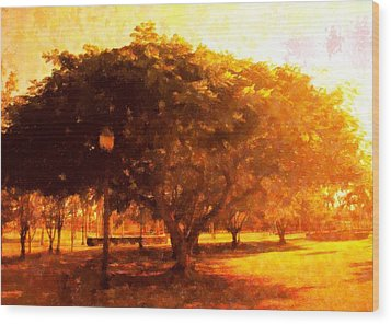 Tree In The Park Wood Print by Florene Welebny