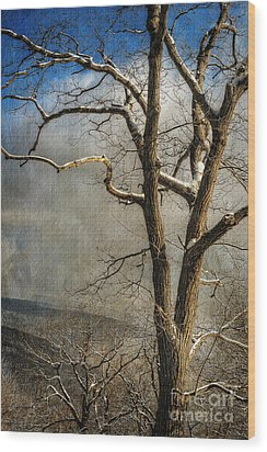 Tree In Winter Wood Print by Lois Bryan