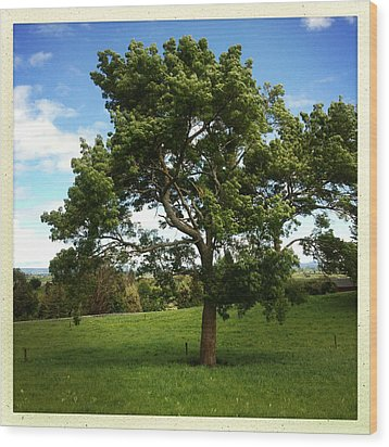 Tree Wood Print by Les Cunliffe