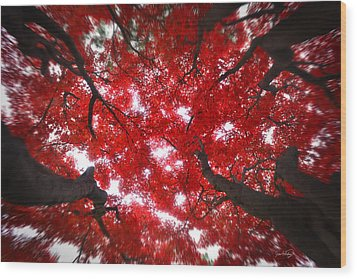 Wood Print featuring the photograph Tree Light - Maple Leaves Fall Autumn Red by Jon Holiday