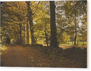 Tree Lined Road Covered With Fallen Wood Print by John Short