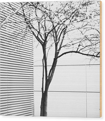 Tree Lines Wood Print by Darryl Dalton
