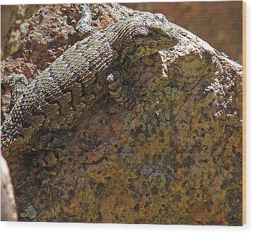 Tree Lizard Wood Print