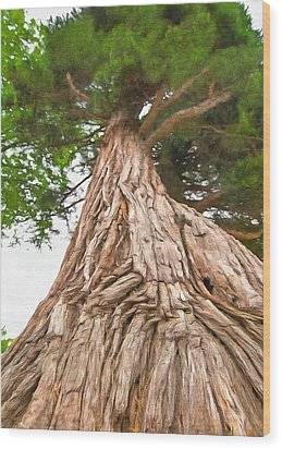 Wood Print featuring the photograph Tree Mass by Marion Johnson