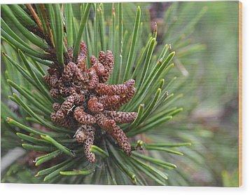 Tree Me Wood Print by Sheldon Blackwell