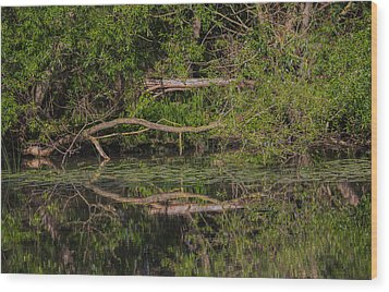 Wood Print featuring the photograph Tree Mirroring In Water by Leif Sohlman