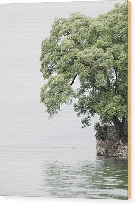 Tree Next To A Lake Wood Print