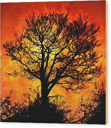Tree Of Fire Wood Print by Persephone Artworks