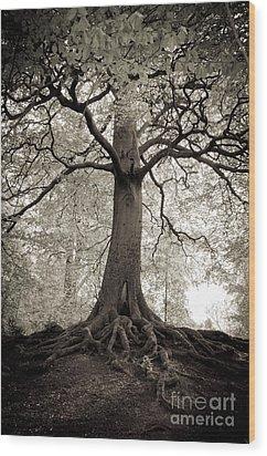Tree Of Life Wood Print by Dominique De Leeuw