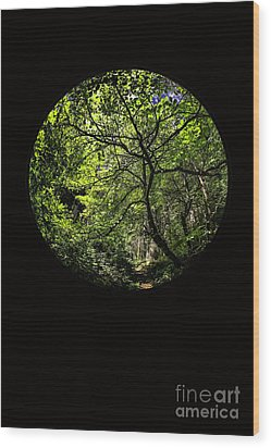 Tree Of Life II Wood Print by Holly Martin