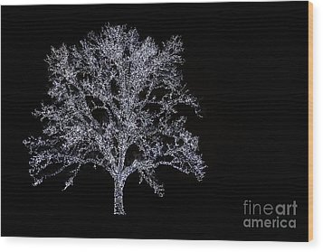Tree Of Light Wood Print