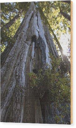 Tree Of Mystery #1 Wood Print