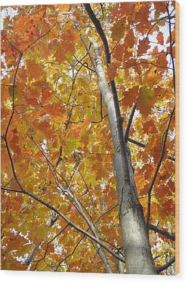 Tree Of Orange Wood Print by Guy Ricketts