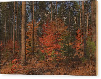 Wood Print featuring the photograph Tree On Fire by Michaela Preston