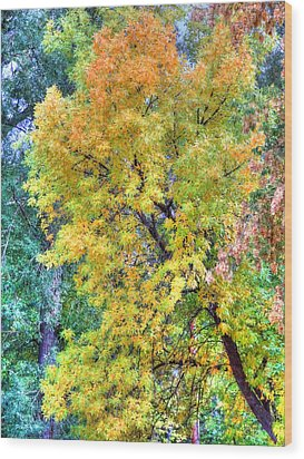 Wood Print featuring the photograph Tree On Fountain Creek by Lanita Williams