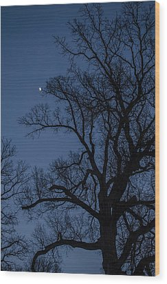 Tree Reaching For The Moon Wood Print