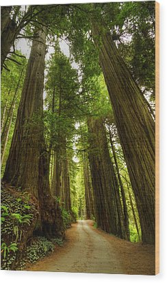 Tree Redwood Ca 3 Wood Print by John Brueske