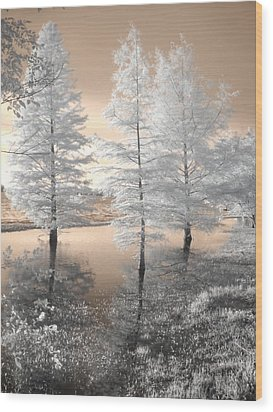 Tree Reflections Wood Print by Jane Linders