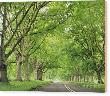 Tree Avenue Wood Print