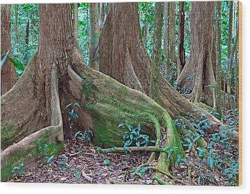 Tree Roots Tropical Rainforest Wood Print by Dirk Ercken