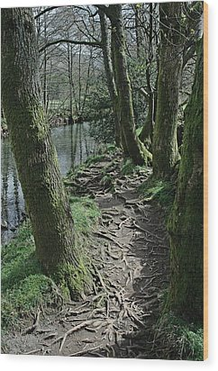 Tree Route Pathway Wood Print
