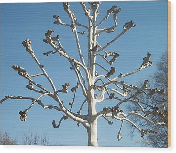 Tree Sculpture Wood Print by Paula Rountree Bischoff