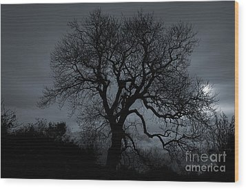 Tree Silhouette Wood Print by Ian Mitchell