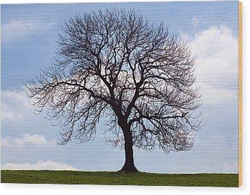 Tree Silhouette Wood Print by Natalie Kinnear