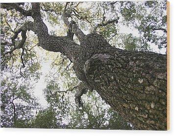 Tree Still Wood Print