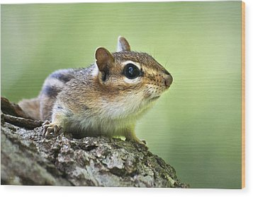 Tree Surfing Chipmunk Wood Print by Christina Rollo