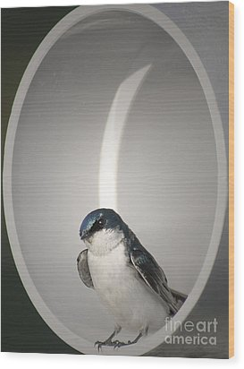 Wood Print featuring the photograph Tree Swallow by Anita Oakley