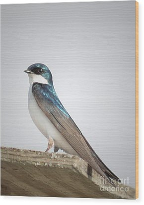 Wood Print featuring the photograph Tree Swallow Portrait by Anita Oakley