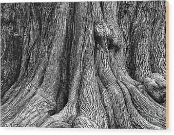 Tree Trunk Closeup Wood Print