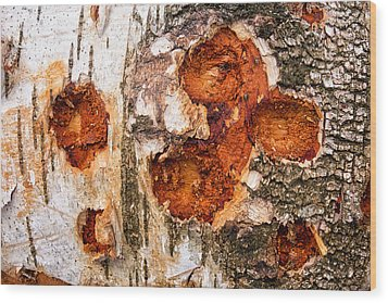 Tree Trunk Closeup - Wooden Structure Wood Print by Matthias Hauser