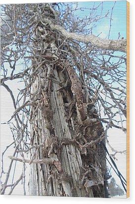 Tree Vines Wood Print by Jenna Mengersen